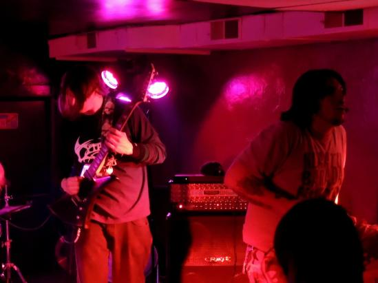lycosa-live